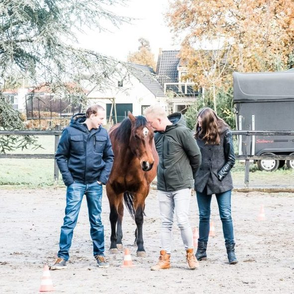 WFA Paarden (33)